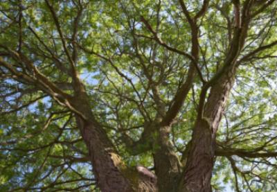 Wandel mee en leer bij tijdens onze bomenwandeldag op 25 oktober